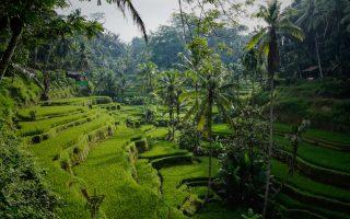 Praktische informatie voor Indonesië