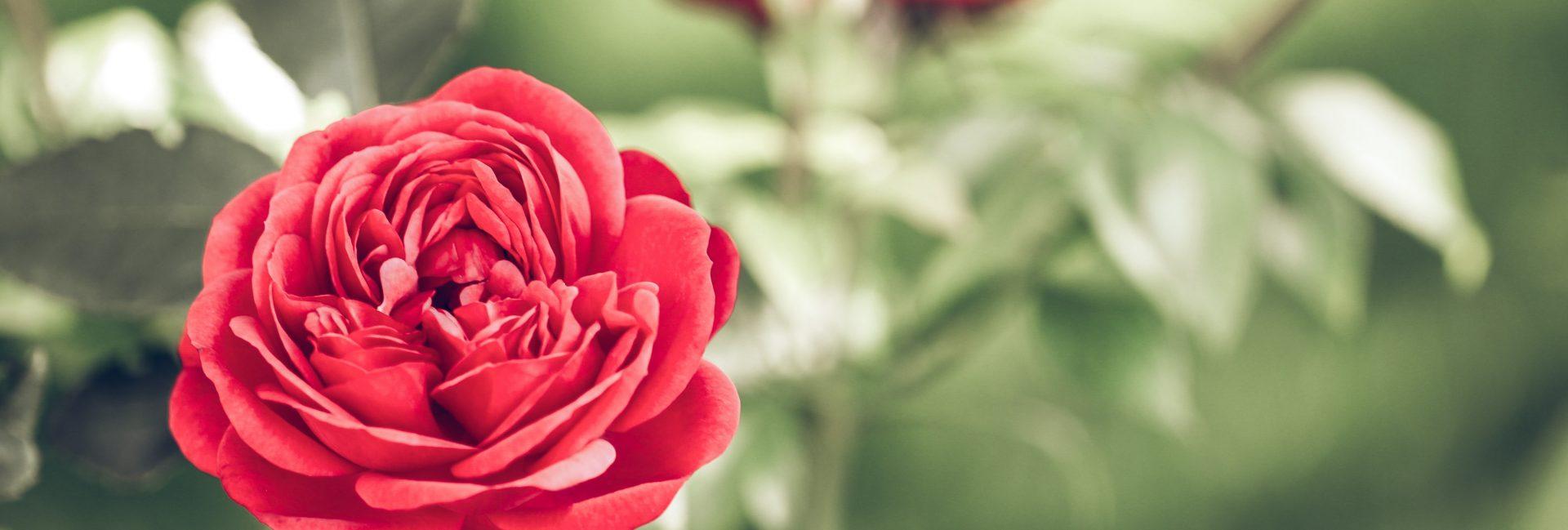 Online bloemen bestellen en laten bezorgen in Amsterdam